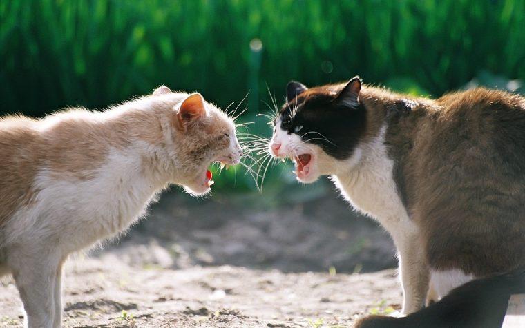 Rissa tra gatti degenera e diventa un tour dei Negramaro