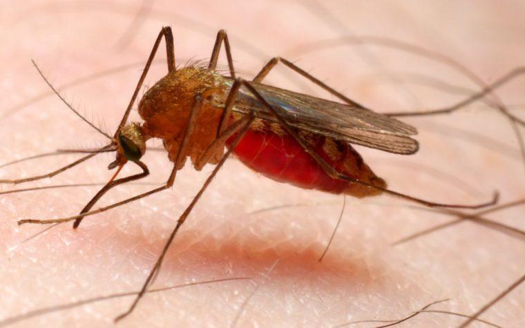 Dopo una lunga assenza tornano la malaria e Ligabue