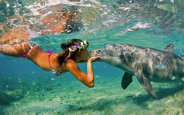I delfini sono animali intelligentissimi. Avete mai visto un delfino a un concerto di Vasco?